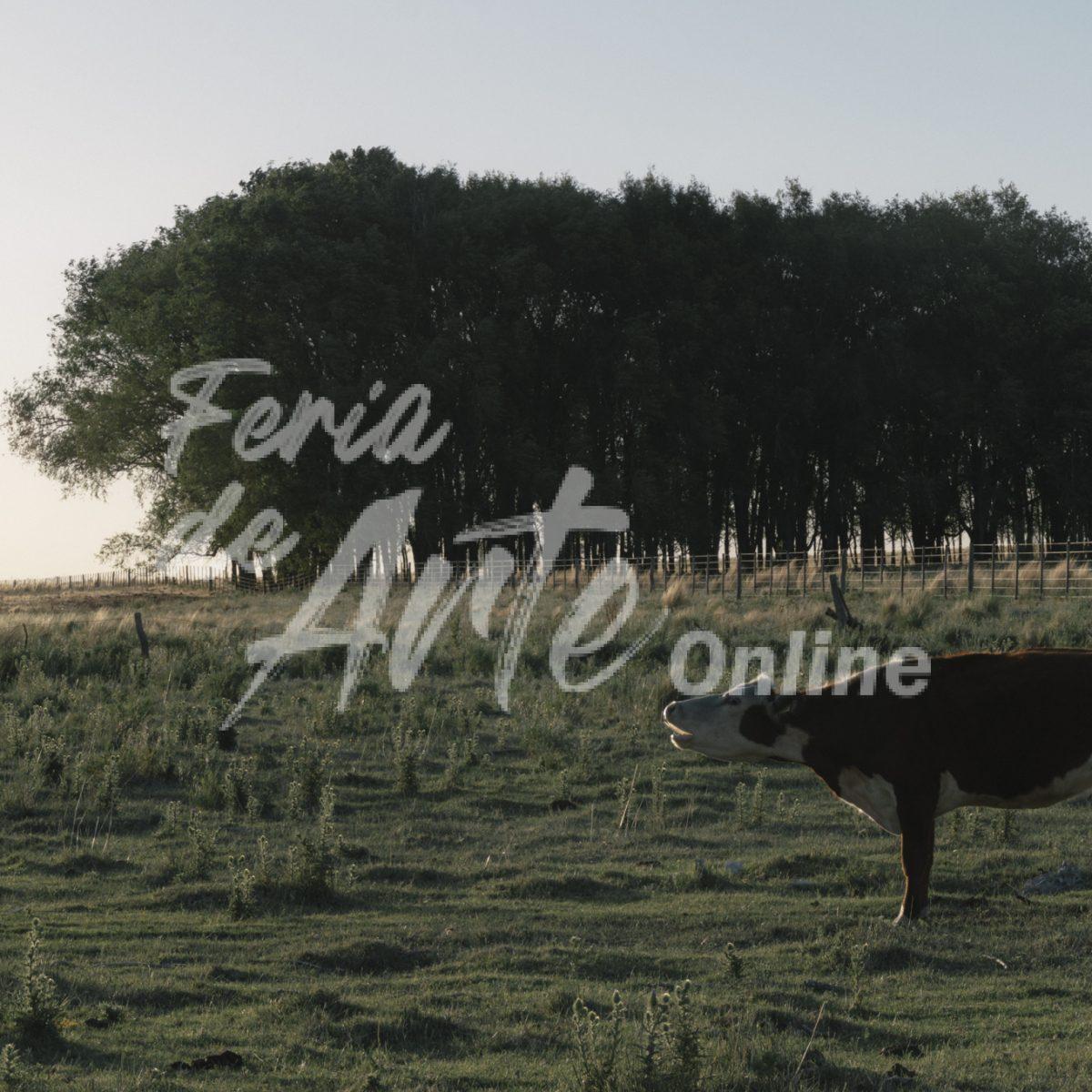 Vaca sola